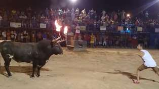 Taunting Idiot Gets Owned By Bull With Flaming Horns