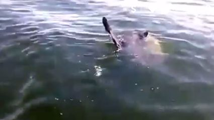 Boston Fisherman Lose Their Minds Over Massive Sunfish