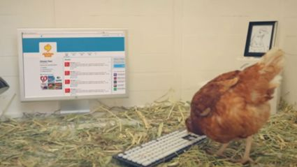 There's A Chicken Called Betty Trying To Become The First Chicken To Post A Proper Tweet