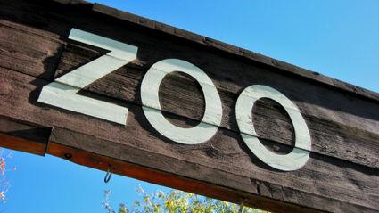 Hauraki Breakfast - Penis Or Genius: Zoos
