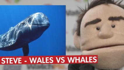 Coach Steve - Wales vs Whales