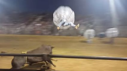 Bullfighting In Zorbs Naturally Ends Terribly