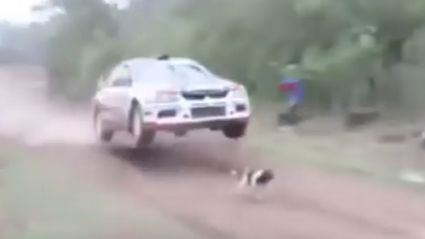 Unbelievable Video Of Rally Car Jumping Over Dog