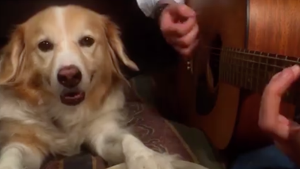 "Here's A Dog Playing ""Smells Like Teen Spirit"""
