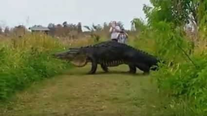 This video of an alligator the size of a dinosaur is f*cking terrifying