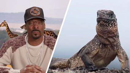 Snoop Dogg narrates that that nature clip of the lizard escaping snakes