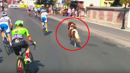 Rogue pony enters the Tour of Poland and races the cyclists