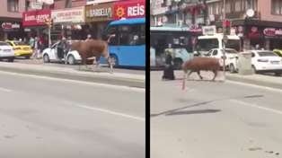 Loose bull totally smokes unsuspecting lady