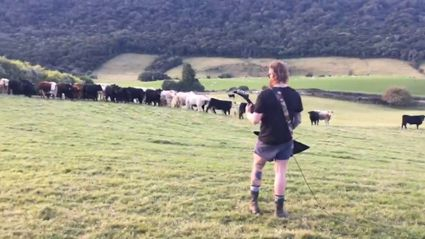 Kiwi farmer plays metal to his cows