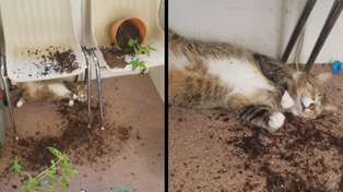 Woman finds her cats wasted after eating her weed plants
