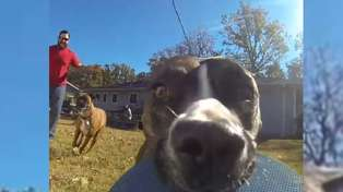 This doggo stealing a GoPro is better than anything on TV